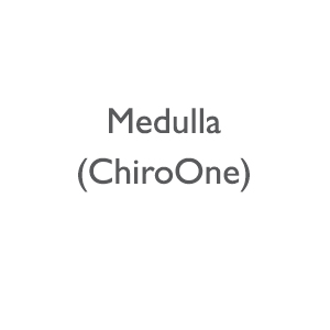 Medulla (Managing Company for Chiro One)